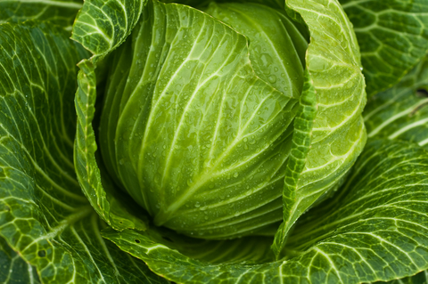 cabbage-soup-diet